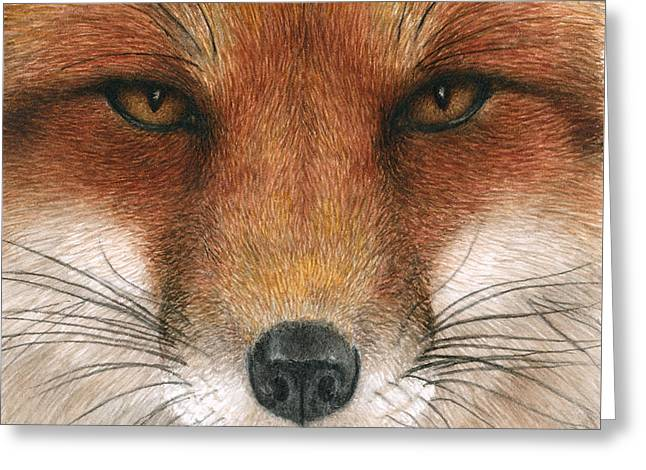 Red Foxes Greeting Cards - Red Fox Gaze Greeting Card by Pat Erickson