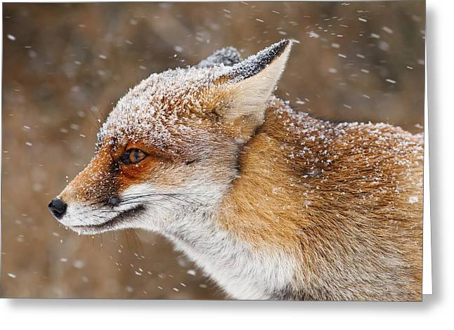 Red Eye Greeting Cards - Red Fox in a Snow Storm Greeting Card by Roeselien Raimond