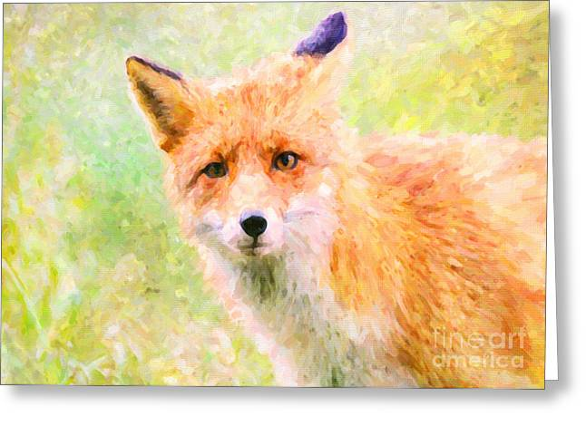 Dogs Digital Greeting Cards - Red Fox Greeting Card by Janice Rae Pariza