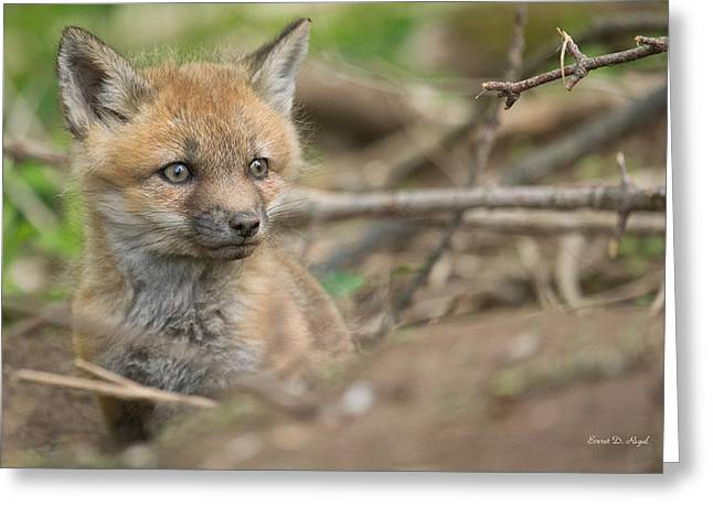 Fox Kit Greeting Cards - Red Fox Kit Greeting Card by Everet Regal
