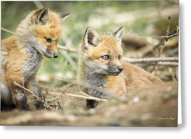 Red Fox Kits Greeting Card by Everet Regal