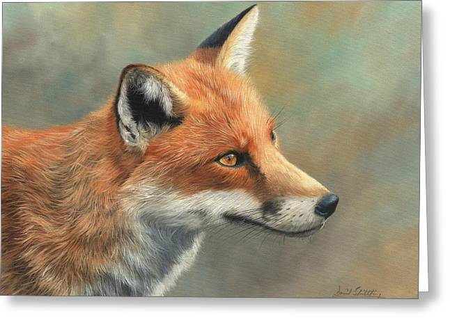 Red Fox Portrait Greeting Card by David Stribbling