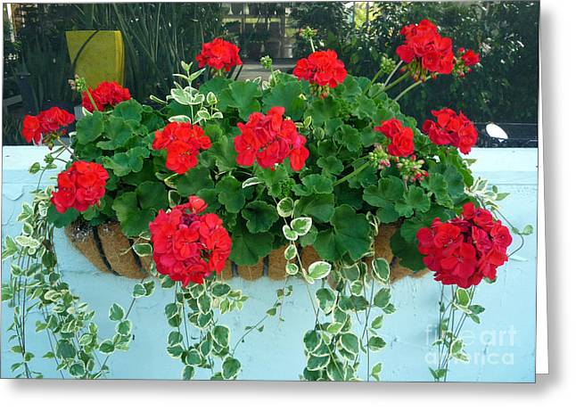 Red Geraniums Greeting Cards - Red Geranium 1 Greeting Card by To-Tam Gerwe