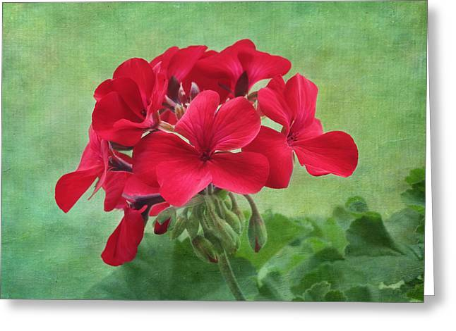 Red Geraniums Photographs Greeting Cards - Red Geranium Flowers Greeting Card by Kim Hojnacki