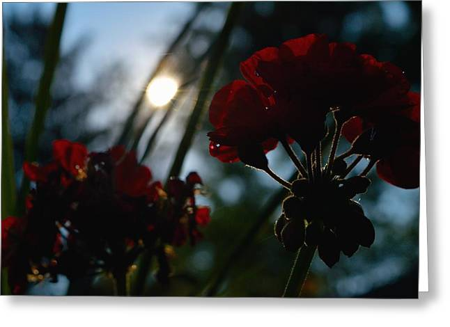 Red Geraniums Greeting Cards - Red Geraniums Greeting Card by Heather Merrick Pratt