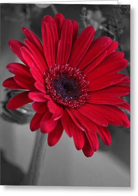 Floral Digital Art Greeting Cards - Red GerberaStudy Greeting Card by Suzanne Gaff