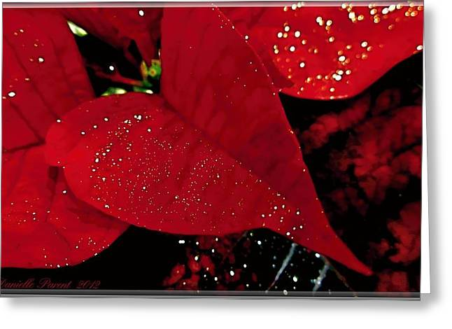 Red Glittered Poinsettias Greeting Card by Danielle  Parent