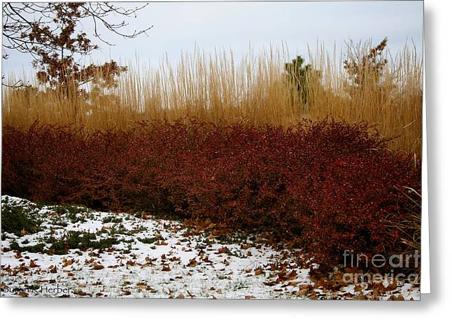 Recently Sold -  - Fall Grass Greeting Cards - Red Gold Hedge Greeting Card by Susan Herber