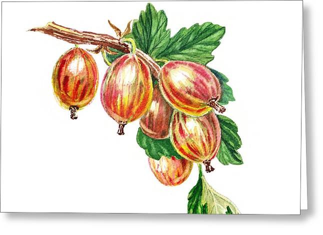 Sour Greeting Cards - Red Gooseberries Bunch Greeting Card by Irina Sztukowski