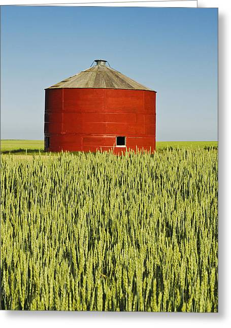 Grain Bin Greeting Cards - Red Grain Bin In Wheat Field Sceptre Greeting Card by Dave Reede