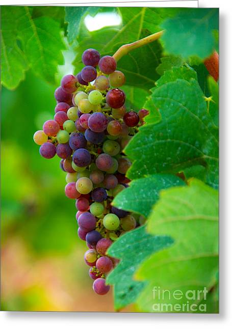 Blue Grapes Greeting Cards - Red Grapes Greeting Card by Hannes Cmarits