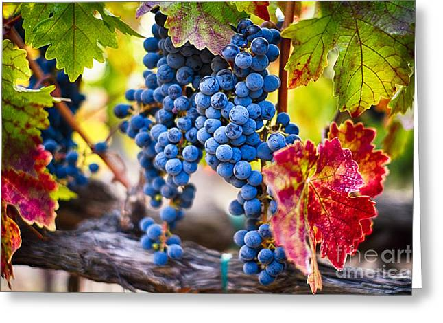 Fruit On The Vine Greeting Cards - Blue Grapes on the Vine Greeting Card by George Oze