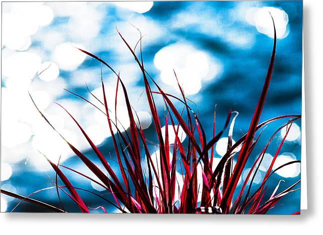 Herbage Greeting Cards - Red Grass 2 Greeting Card by Alexander Senin