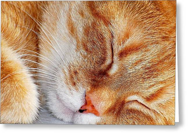 Cat Face Greeting Cards - Irish Eyes are Sleeping Greeting Card by Diana Angstadt