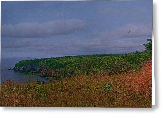 Flying Seagull Greeting Cards - Red Head New Brunswick Greeting Card by Ken Morris