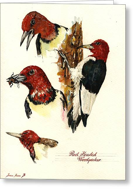 Wildlife Watercolor Greeting Cards - Red headed woodpecker bird Greeting Card by Juan  Bosco