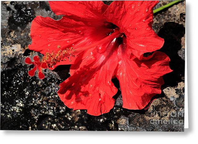 Reception Greeting Cards - Red Hibiscus Greeting Card by Cheryl Young