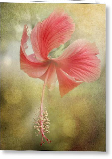 Rose Of Sharon Greeting Cards - Red Hibiscus Greeting Card by David and Carol Kelly