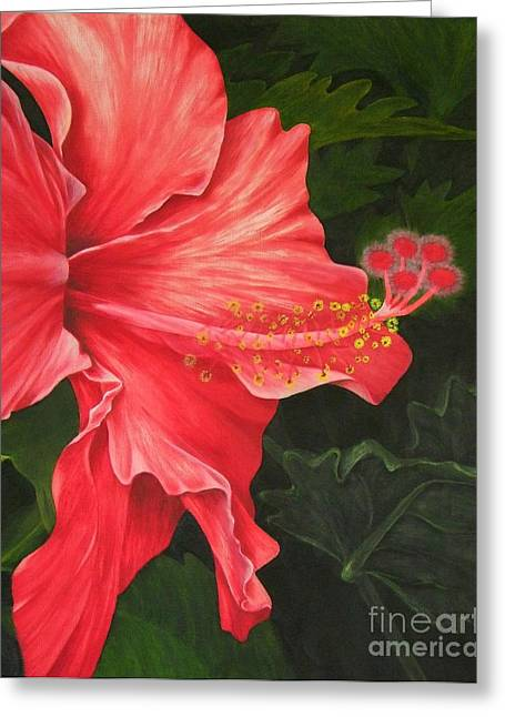 Mary Deal Greeting Cards - Red Hibiscus Greeting Card by Mary Deal