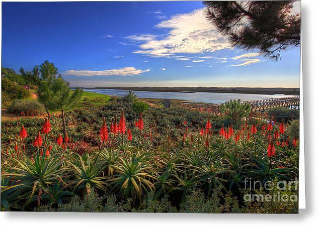 Praia De Faro Greeting Cards - Red Hot Aloes Greeting Card by English Landscapes