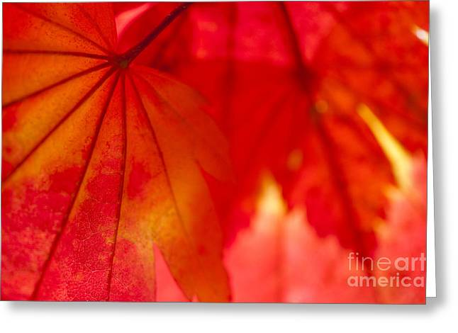 Backlit Greeting Cards - Red Hot Greeting Card by Anne Gilbert