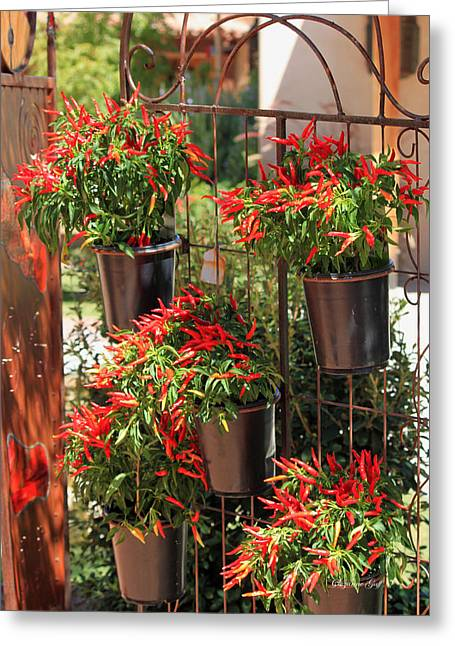 Trellis Greeting Cards - Red Hot Chili Peppers Greeting Card by Suzanne Gaff