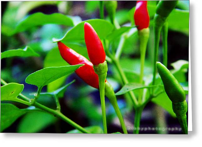Red Hot.. Chillis Greeting Card by Ibrahim Mat Nor