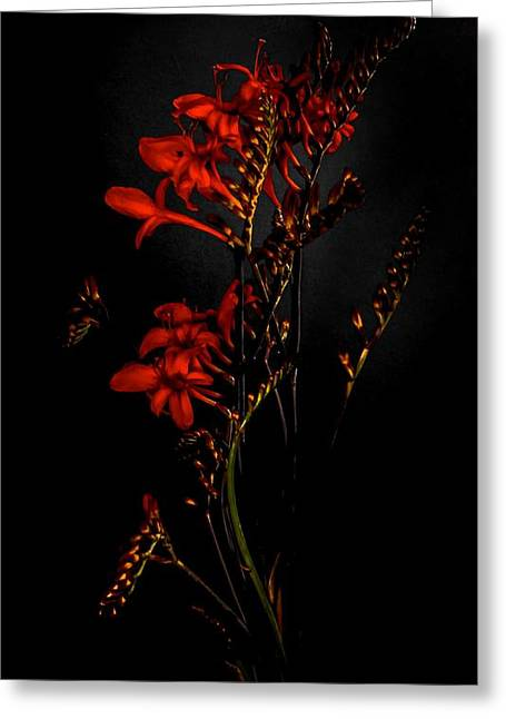 Photographs With Red. Greeting Cards - Red Greeting Card by Hugo Bussen