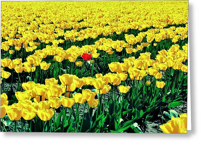 Red In A Yellow World Greeting Card by Benjamin Yeager