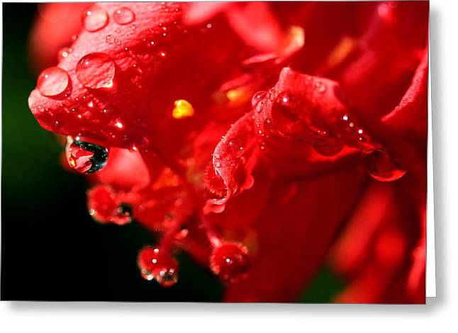 Flower Express Greeting Cards - Red Is Sweet Greeting Card by Janet Pancho Gupta