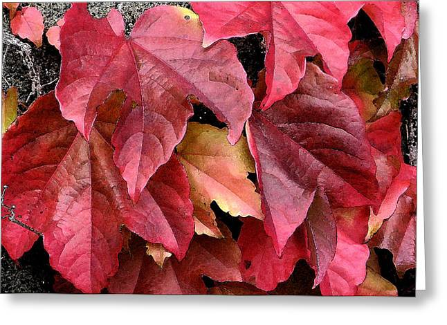 Red Leaves Greeting Cards - Red Ivy Leaves DB Greeting Card by Rich Franco