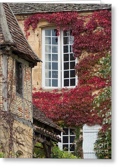 French Doors Greeting Cards - Red Ivy Window Greeting Card by Paul Topp