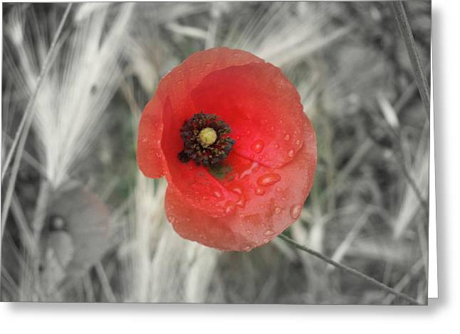 Whilte Flower Greeting Cards - Red Greeting Card by Katherine Hibbs