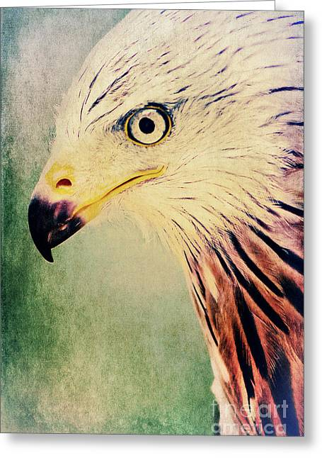 Kites Mixed Media Greeting Cards - Red Kite Art Greeting Card by Angela Doelling AD DESIGN Photo and PhotoArt