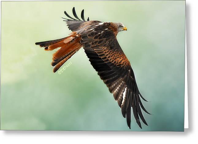 Kites Greeting Cards - Red Kite in Flight Greeting Card by Bev  Brown