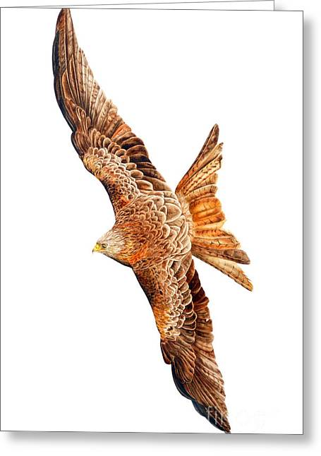 Kite Greeting Cards - Red Kite Greeting Card by Marie Burke