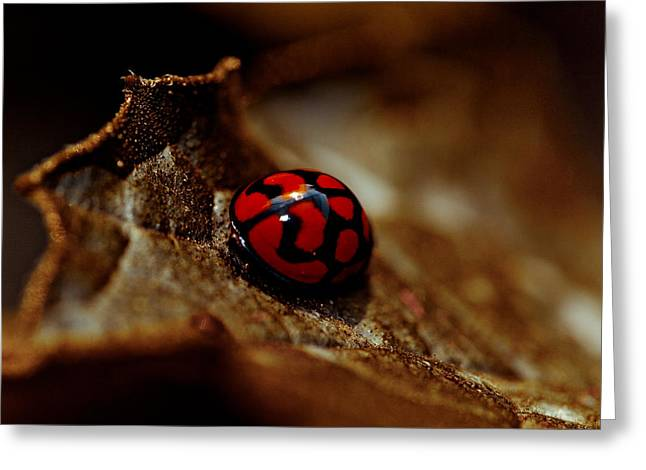 Red Lady Bug Greeting Card by Isabel Laurent