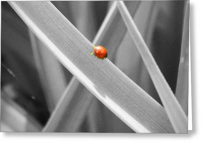 Neurotic Images Photography Greeting Cards - Red Ladybird Greeting Card by Chalet Roome-Rigdon