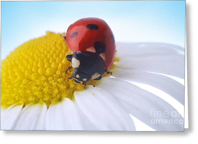 Red Ladybug Greeting Card by Boon Mee
