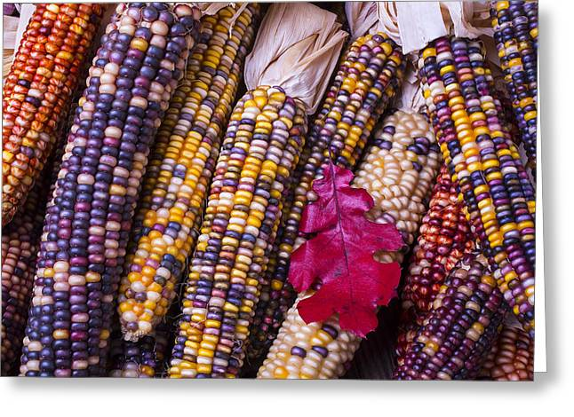 Red Leaves Photographs Greeting Cards - Red leaf and Indian corn Greeting Card by Garry Gay
