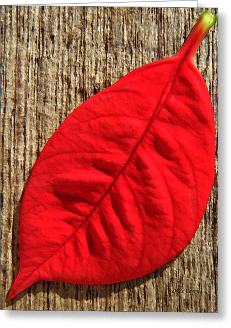 Thin Greeting Cards - Red Leaf Greeting Card by Chris Berry