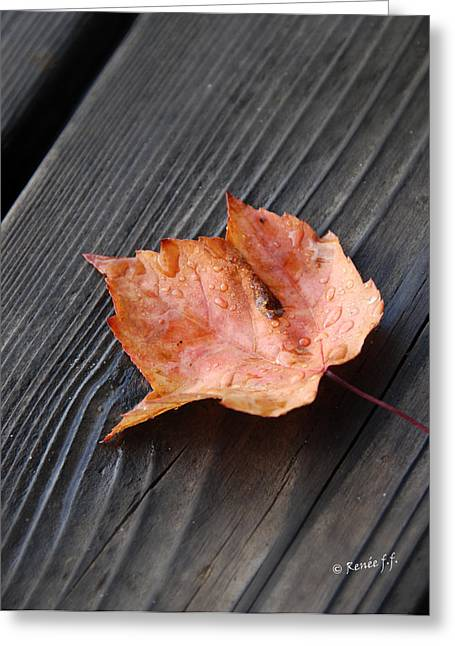 Photographs With Red. Photographs Greeting Cards - Red Leaf On the Dock Greeting Card by Renee Forth-Fukumoto