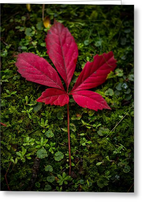 Red Leaves Photographs Greeting Cards - Red Leaf Greeting Card by Shane Holsclaw