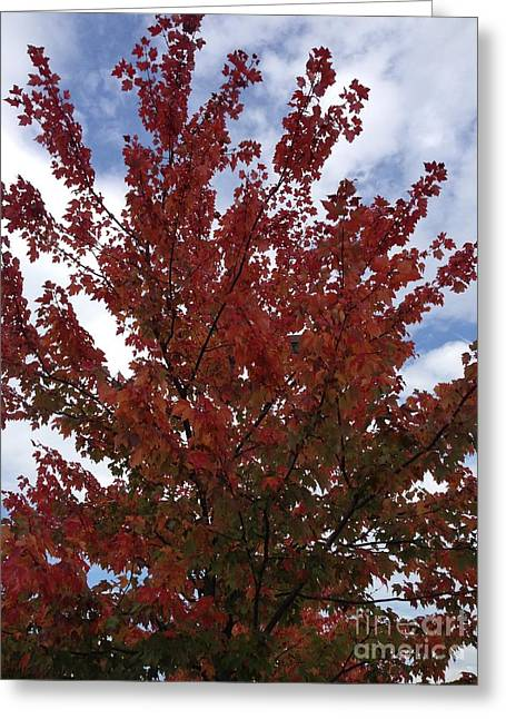 Cornelia Connie D Dedona Greeting Cards - Red Leaves Greeting Card by Cornelia Connie D DeDona
