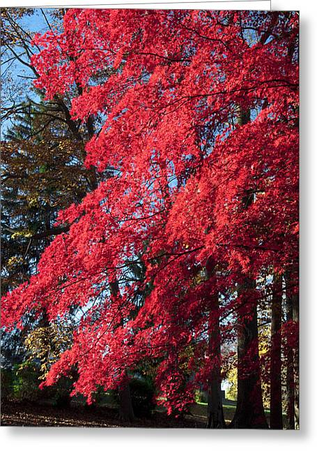 Red Leaves Digital Greeting Cards - Red Leaves in Autumn Greeting Card by Bill Cannon
