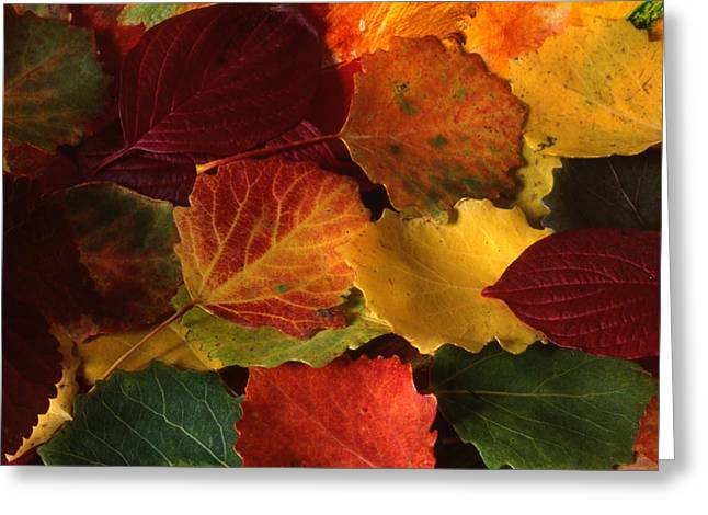 Patterned Greeting Cards - Red Leaves Greeting Card by IB Photo