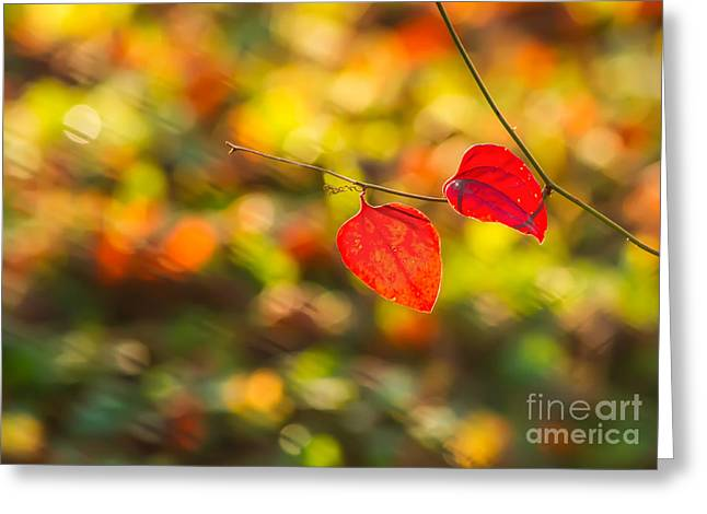 Red Leaves Greeting Cards - Red Leaves Greeting Card by Leyla Ismet