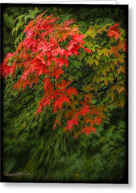 Fall Scenes Greeting Cards - Red Leaves of Fall Greeting Card by LeeAnn McLaneGoetz McLaneGoetzStudioLLCcom