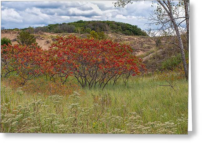 Indiana Flowers Greeting Cards - Red Leaves on Grassy Dunes Greeting Card by John Bailey
