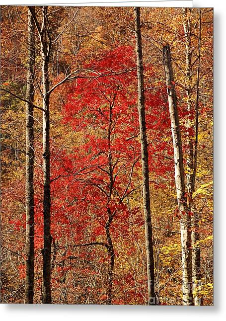 Red Leaves Greeting Card by Patrick Shupert